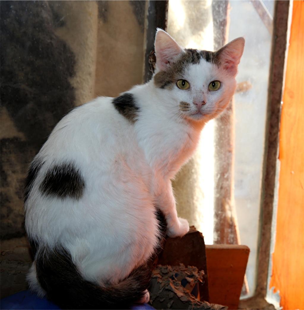 Parrainage des chats de Mme Angela Chats_20