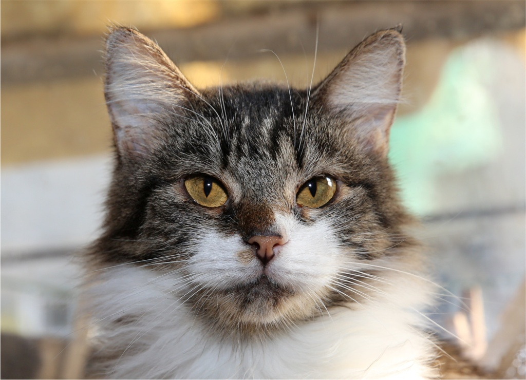 Parrainage des chats de Mme Angela Chats_21