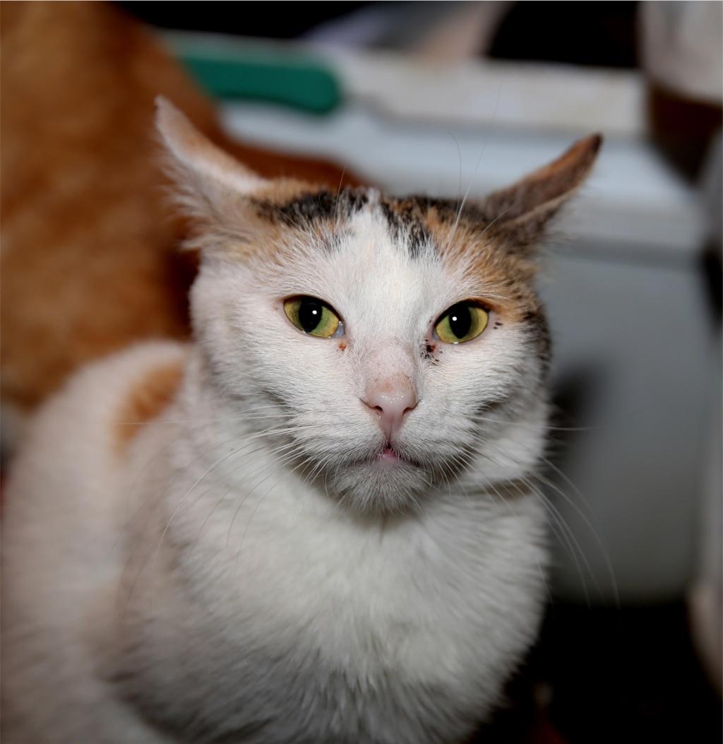 Parrainage des chats de Mme Angela Chats_23