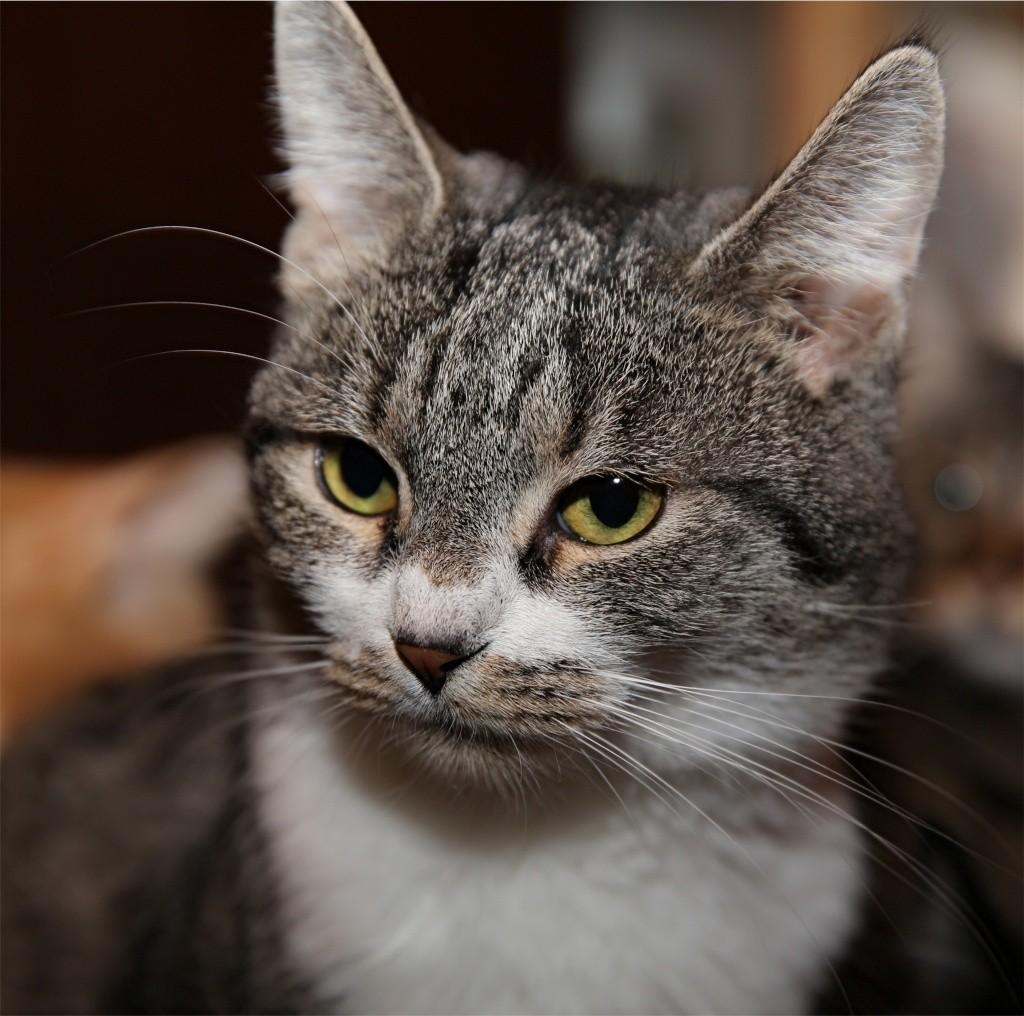 Parrainage des chats de Mme Angela Chats_24