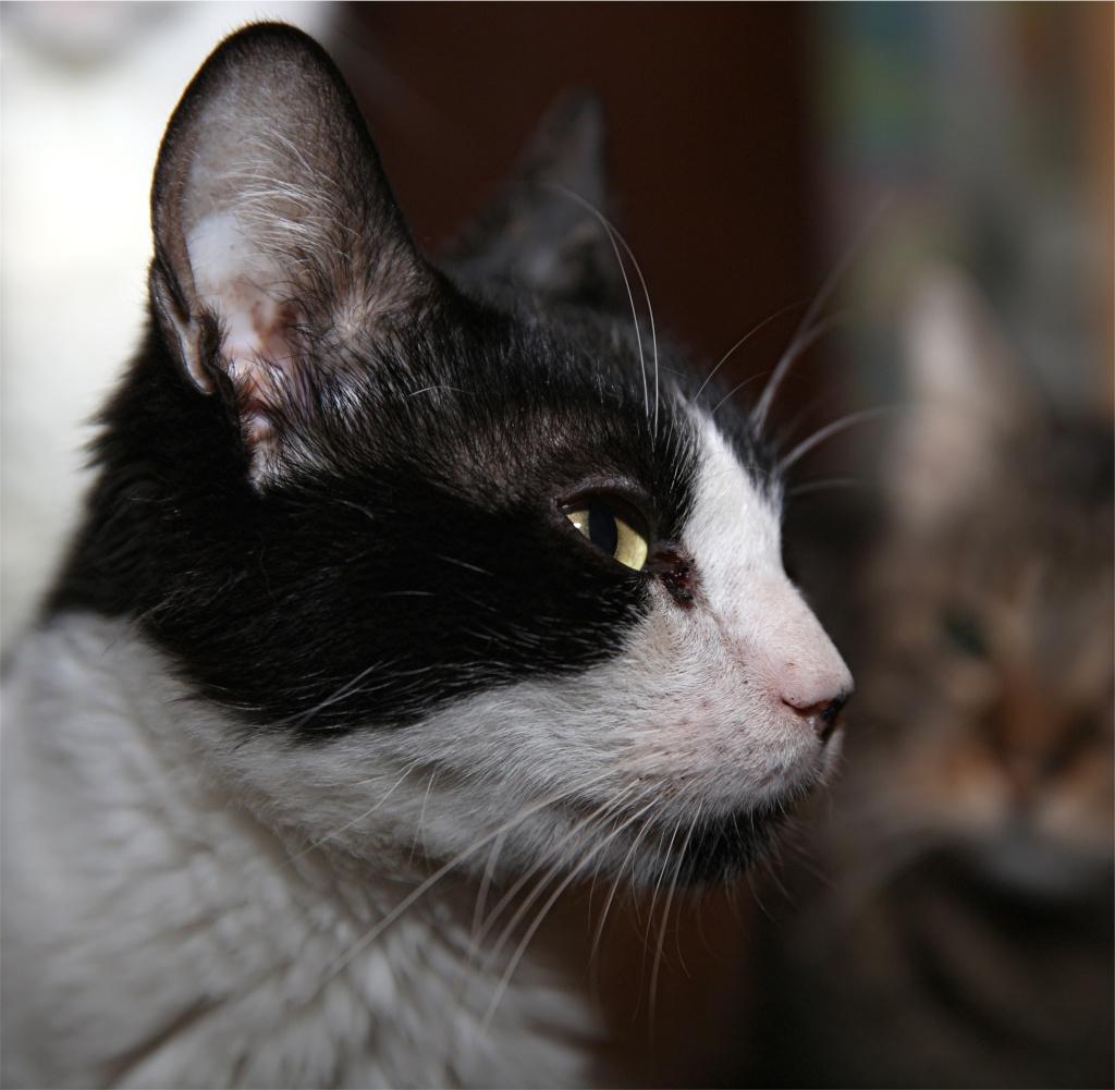 Parrainage des chats de Mme Angela Chats_26