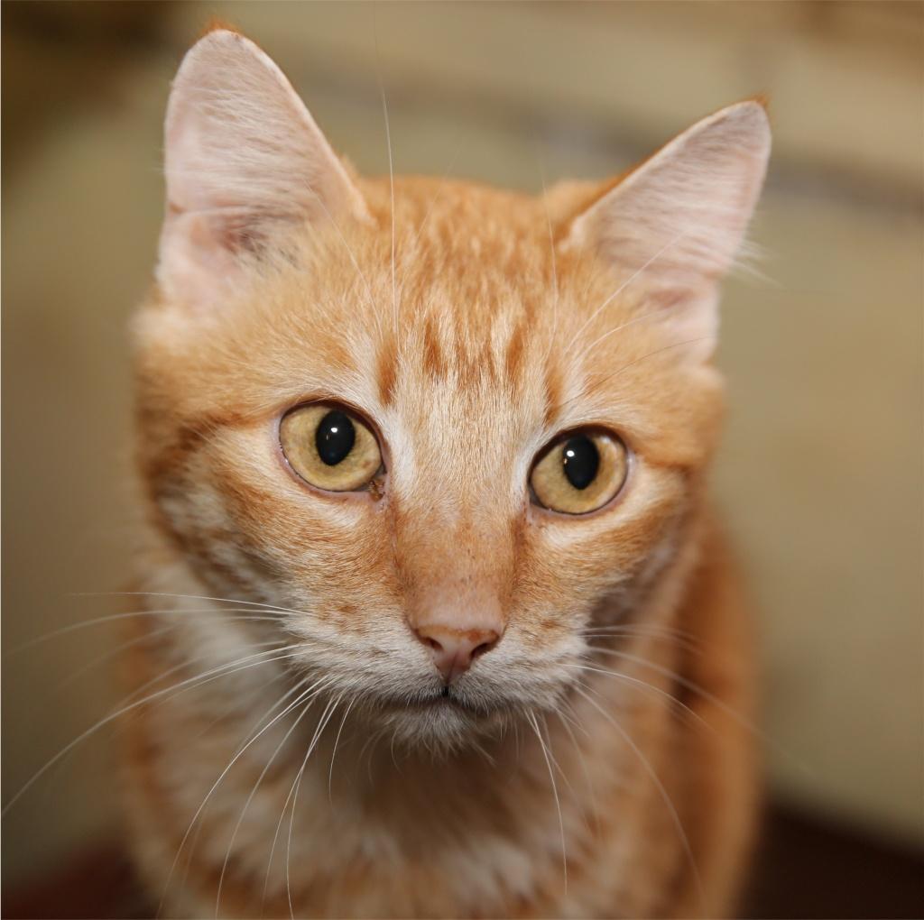 Parrainage des chats de Mme Angela Chats_27