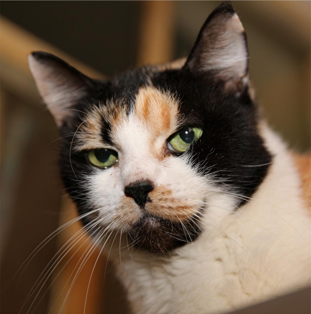 Parrainage des chats de Mme Angela Chats_28