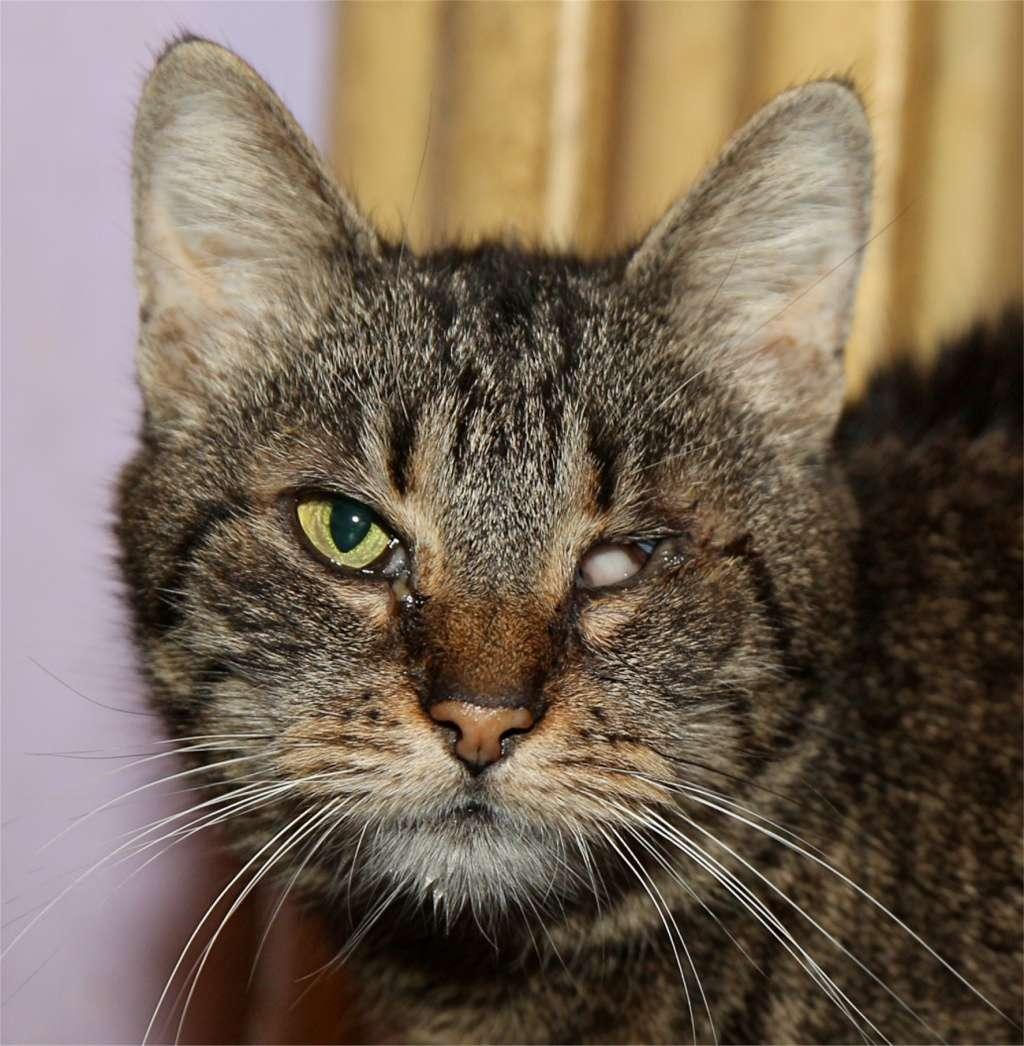 Parrainage des chats de Mme Angela Chatte15