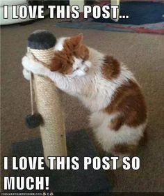 disregard this post Cat_lo10