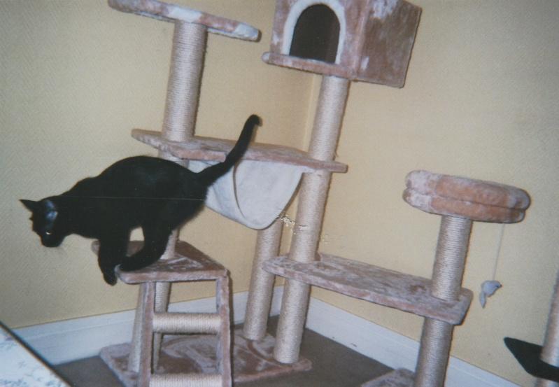 Jameson, chaton noir né le 11/04/2014 Jackso10