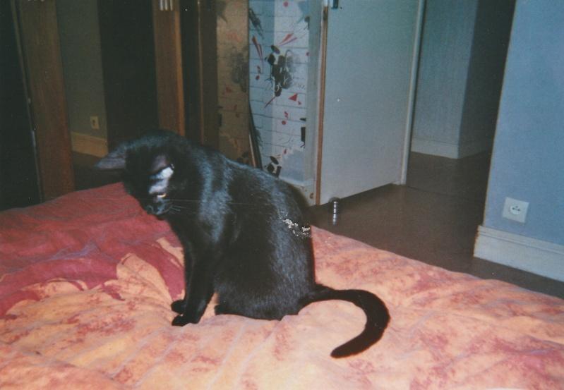 Jameson, chaton noir né le 11/04/2014 Jackso11