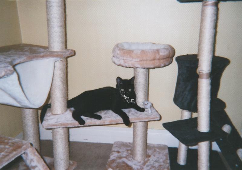 Jameson, chaton noir né le 11/04/2014 Jackso12