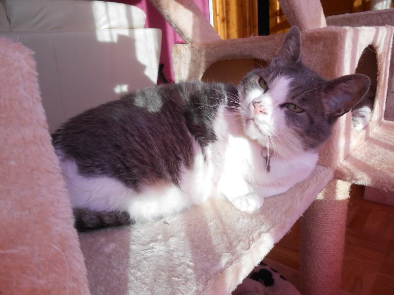 Le Noël 2015 de nos Handi'cats Dscn6610