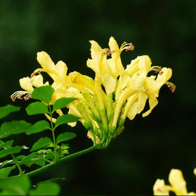 Plantes étonnantes (ou belles ou intéressantes ou marrantes ou ce que vous voulez) - Page 2 Teco2n10