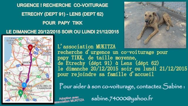ARRIVEE DE SERBIE DU 20/12 DES CHIENS DE BELLA + BACKA  - Page 3 Fiche_10