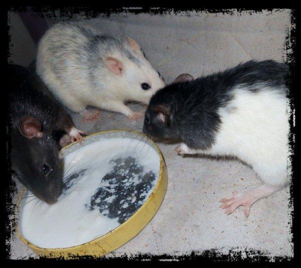 """Mes """"pépéttes et le pot de lait""""  32649515"""