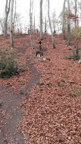 15-11-2015 - Forêt de Hez au départ de Bresles - Page 4 20151112