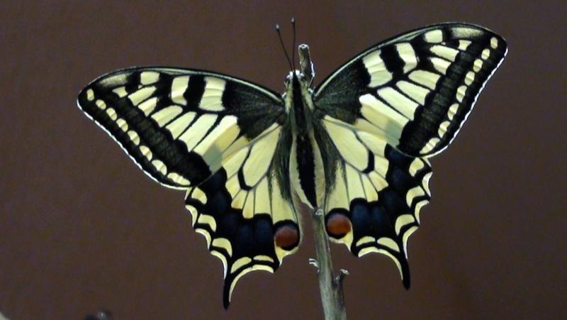 Papillons et autres insectes - Page 2 Dsc00110