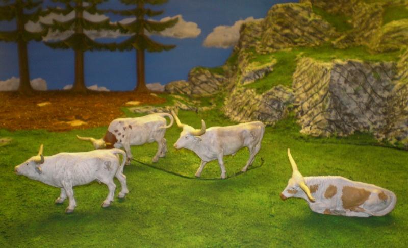 Meine Longhorn-Herde wächst - Seite 2 Barthe10