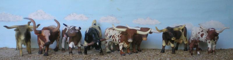 Meine Longhorn-Herde wächst - Seite 2 Longho14