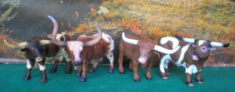 Meine Longhorn-Herde wächst - Seite 2 Longho15