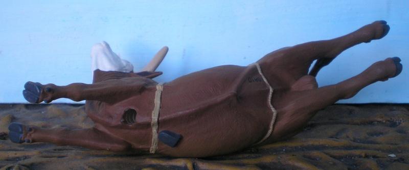 Meine Longhorn-Herde wächst - Seite 2 Safari18