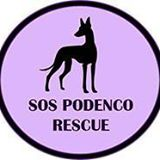 """ SOS Podenco Rescue "" Sossfg10"