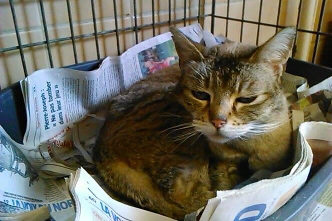 Photos des chats sauvés, avant/après - Page 8 11798010
