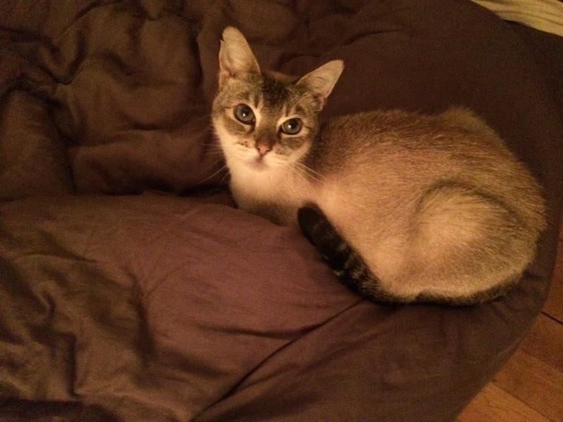 Photos des chats sauvés, avant/après - Page 8 Img_0710
