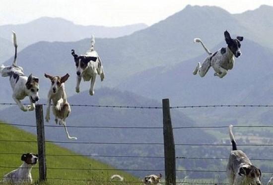 Nos amis, les animaux(quand ils font semblant d'être bête) - Page 2 Foto310