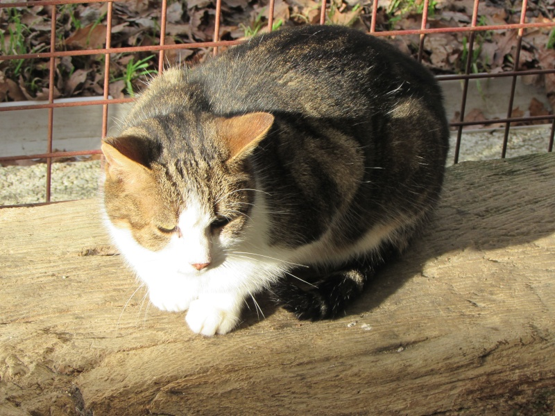 GEDY le chat - Page 2 01511