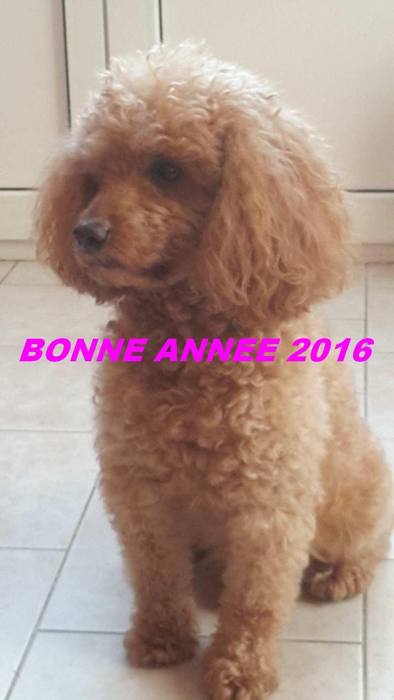 BONNE ANNEE 2016 20151233