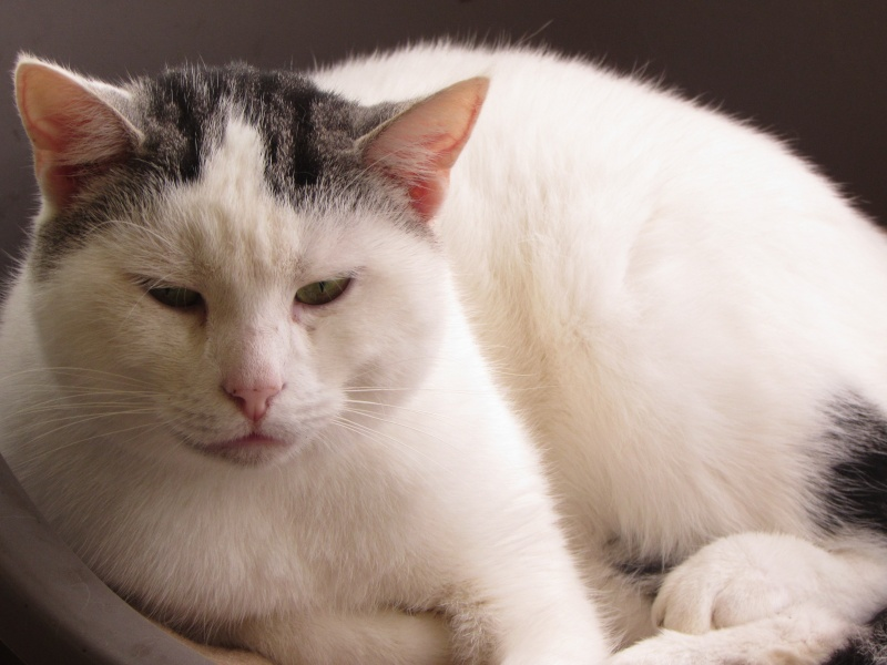 CROGIS LE CHAT Img_8748