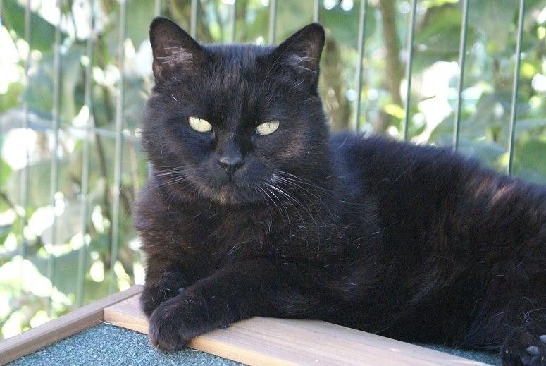 SOREN, 8 ans, câlinou FIV à adopter sans chat (27) - Page 2 Soren10