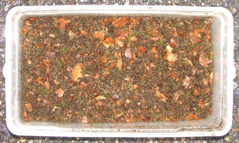 Substrat d'hibernation pour les carabes. Img_5215