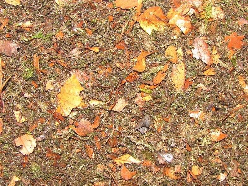 Substrat d'hibernation pour les carabes. Img_5216