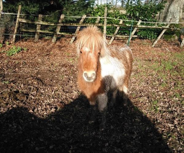 TAGADA - ONC poney typé Shetland né en 2008 - adopté en août 2013 - Page 2 Tagada12