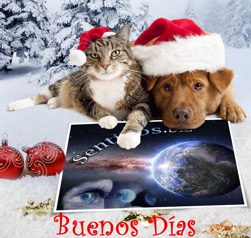 Buenos Días, Tardes, Noches DICIEMBRE 2015 810