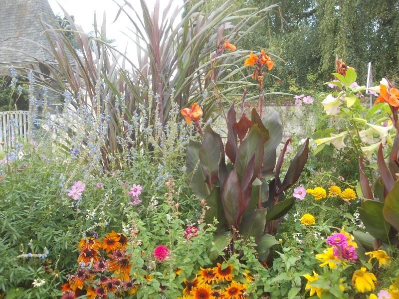 Association de plantes dans vos massifs  - Page 2 Dscn6916