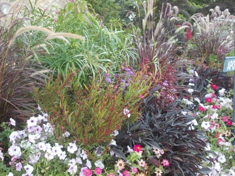 Association de plantes dans vos massifs  - Page 2 Dscn7413