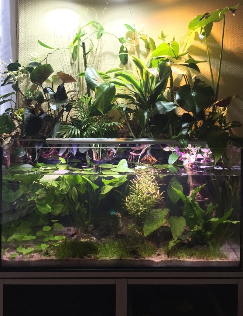 Axolotl'house Image61