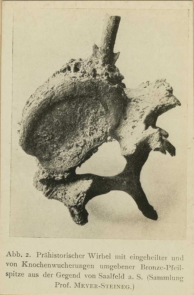L'ARC - Page 2 Prehis10
