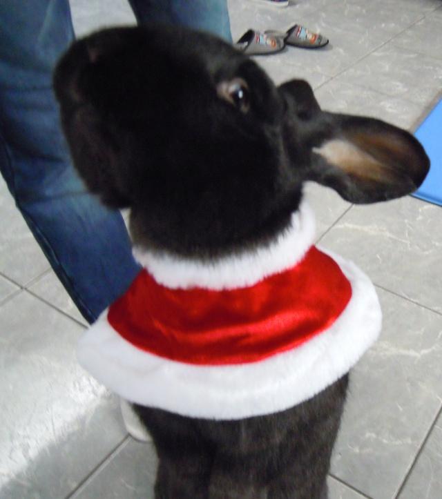 Père-Noël Surprise 2015 - Page 37 Olaflu10