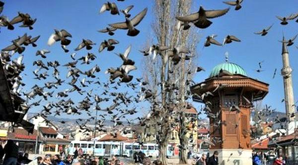 Borba protiv golubova na sarajevskoj Baščaršiji 114