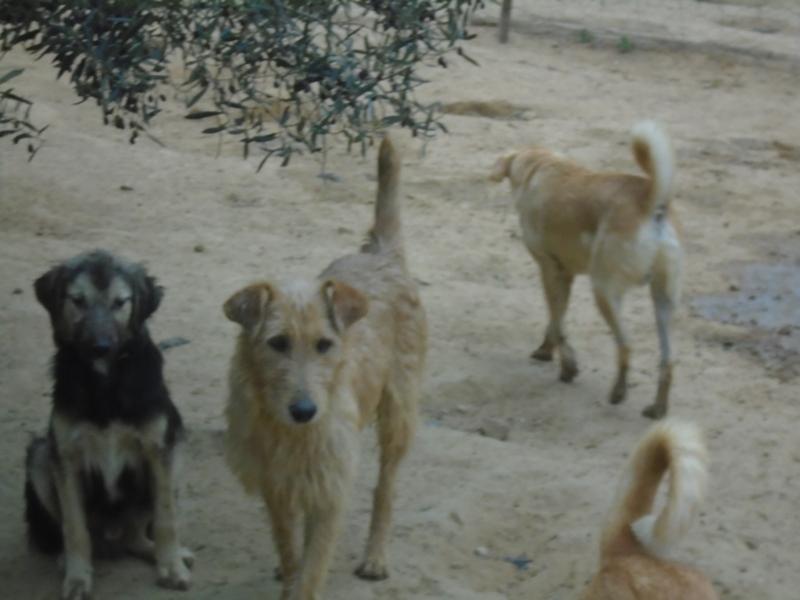 Association PAT (Protection Animaux de Tunisie) - Page 2 Michou14
