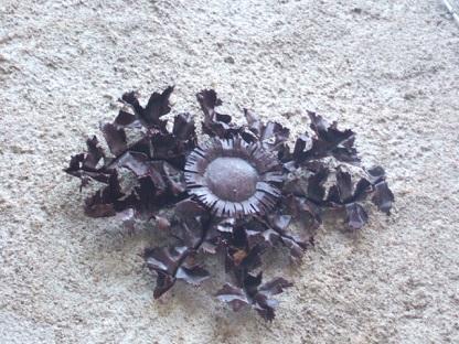Carlina acanthifolia - cardabelle Dscf9015