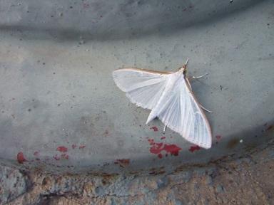 fil(et) à papillons - Page 8 Dscf9118