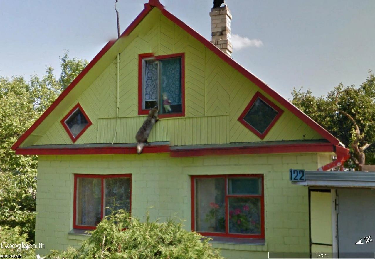 Endroits insolites en Street View Renard10