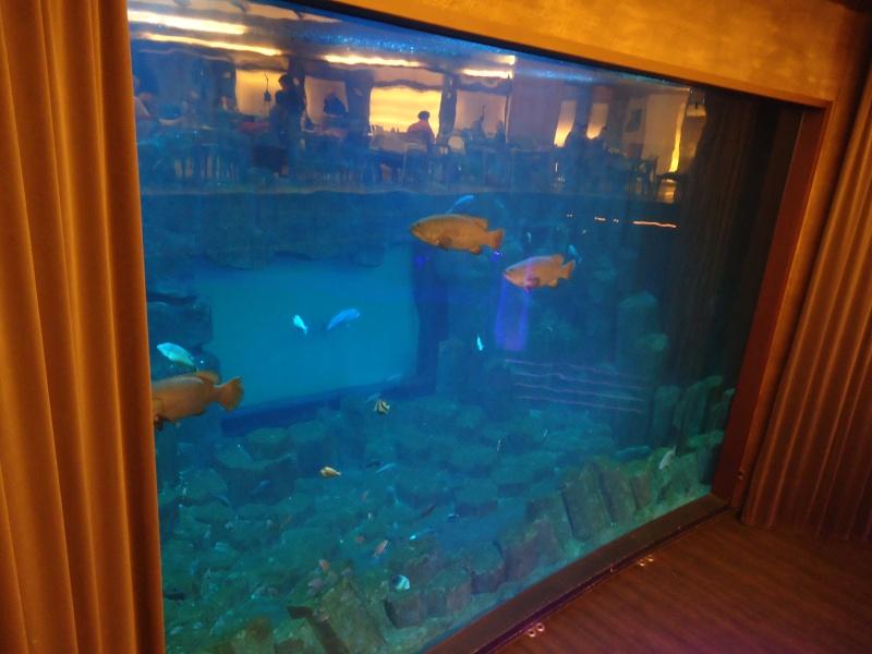 Aquarium du Trocadero à Paris Dsc08510