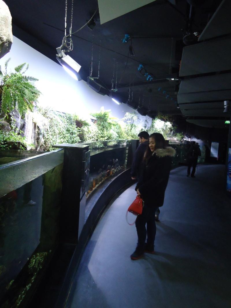 Aquarium du Trocadero à Paris Dsc08511