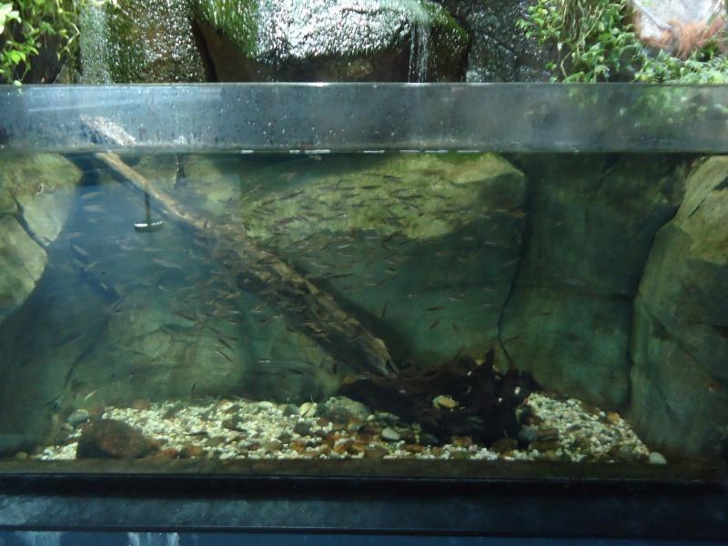 Aquarium du Trocadero à Paris Dsc08512
