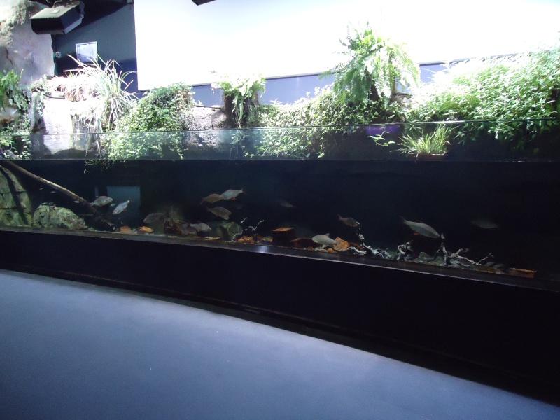 Aquarium du Trocadero à Paris Dsc08513