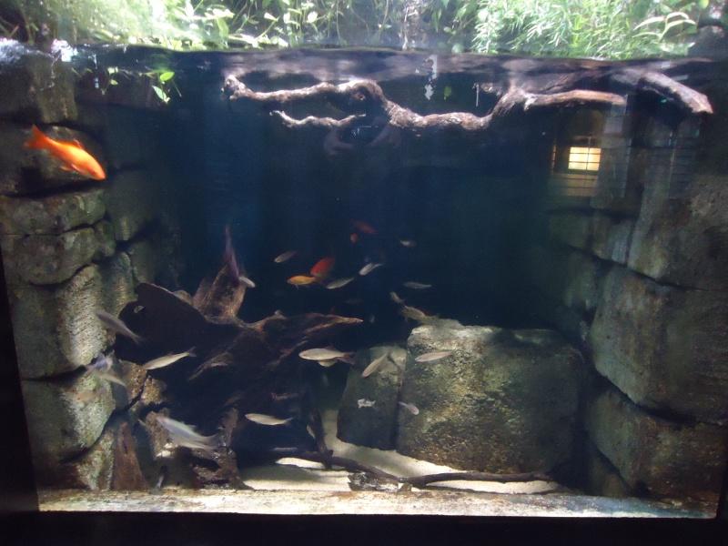 Aquarium du Trocadero à Paris Dsc08514
