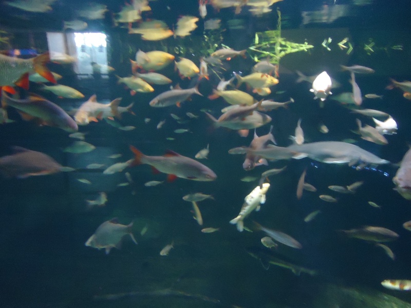 Aquarium du Trocadero à Paris Dsc08519
